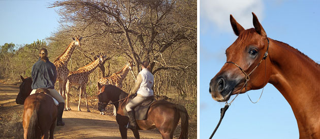 pakamisa, private, game, reserve, accommodation, honeymoon, pongola, kwazulu-natal, outdoor, activities